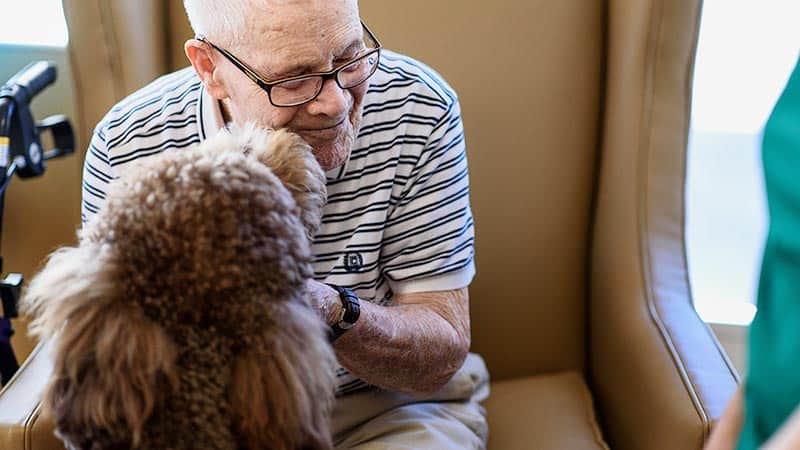 Senior man with brown therapy dog licking his face